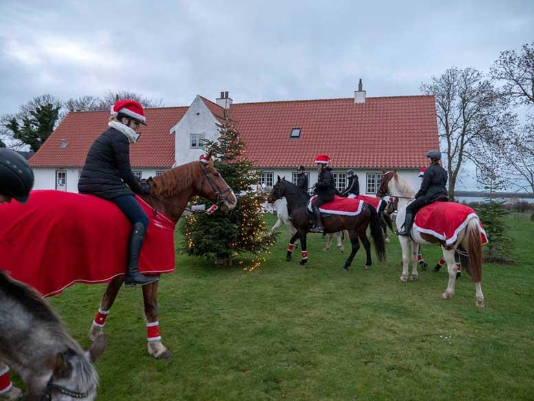 2 s ndag i advent smukke heste p tur rundt p bog. Black Bedroom Furniture Sets. Home Design Ideas