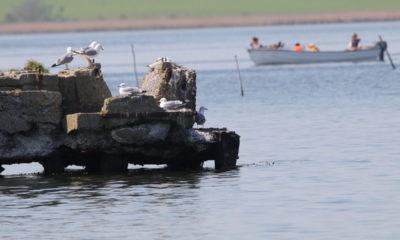 Billeder-fra-Møn-ved-dæmningen-til-Bogø-smukke-billeder-stemning-måger-båd-IMG_4799