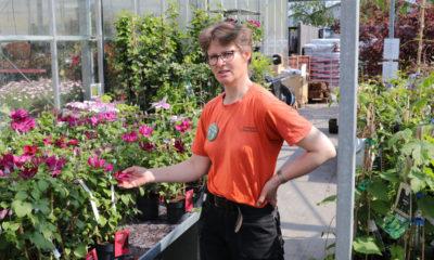 Flemmings Planteskole i Vordingborg med en dværg Gingo blomst