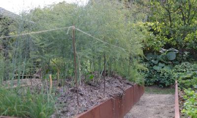Vild-have-i-Nyråd-Haveselskabet-Næstved-Michael-Krogh-asparges-og-ålegræs-IMG_7740